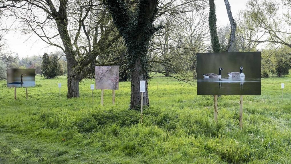 Exposition de Florian Bestel à l'arboretum de Versailles-Chèvreloup © MNHN - Agnès Iatzoura