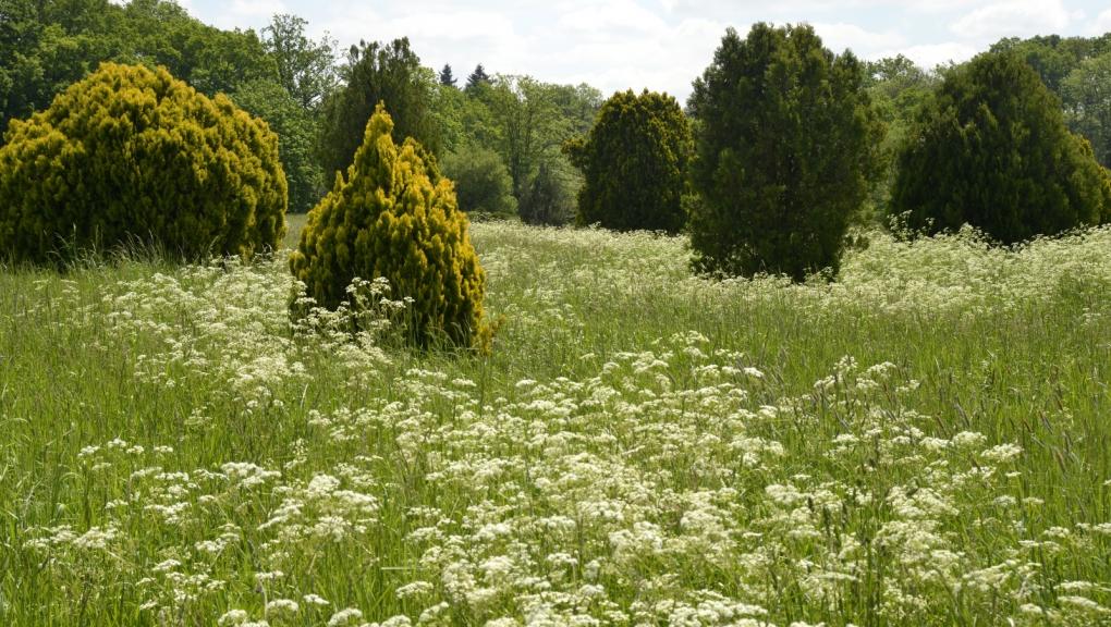 Prairie de la zone horticole en mai © MNHN - S. Gerbault