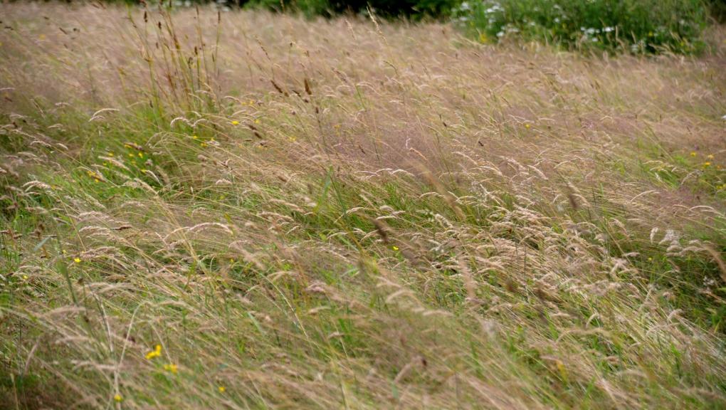 Prairie de Chèvreloup en juin © MNHN - S. Gerbault