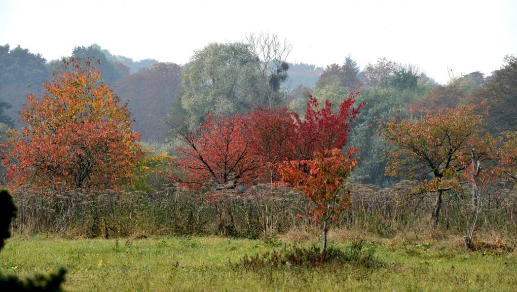 La prairie des cerisiers japonais en octobre © MNHN - S.Gerbault