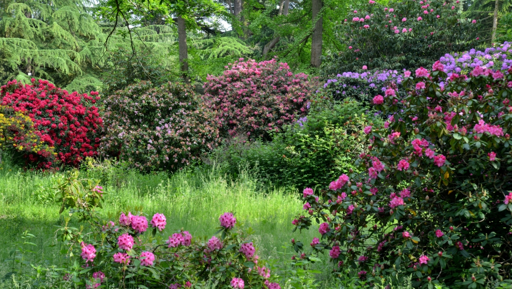 Collections de rhododendrons © MNHN - S. Gerbault