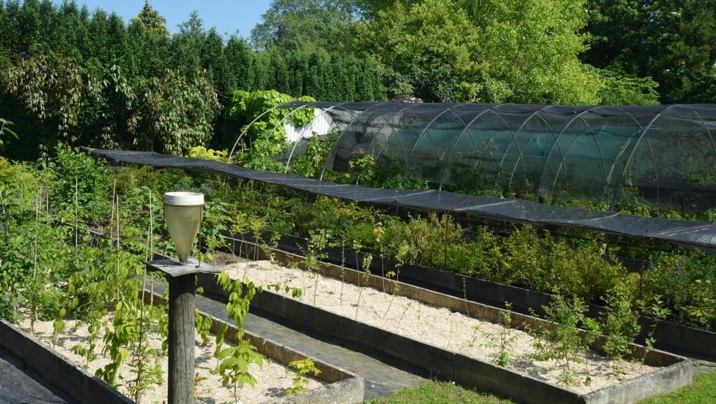 Ombrières dans les pépinières de l'Arboretum de Versailles-Chèvreloup © MNHN - S. Gerbault