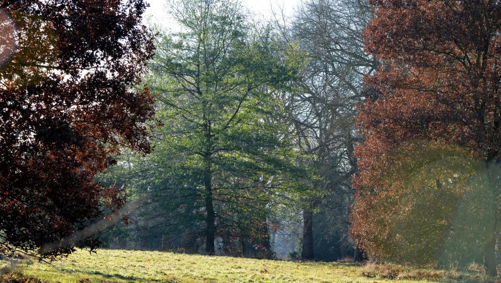 Le Quercetum de l'Arboretum de Versailles-Chèvreloup © MNHN - S. Gerbault