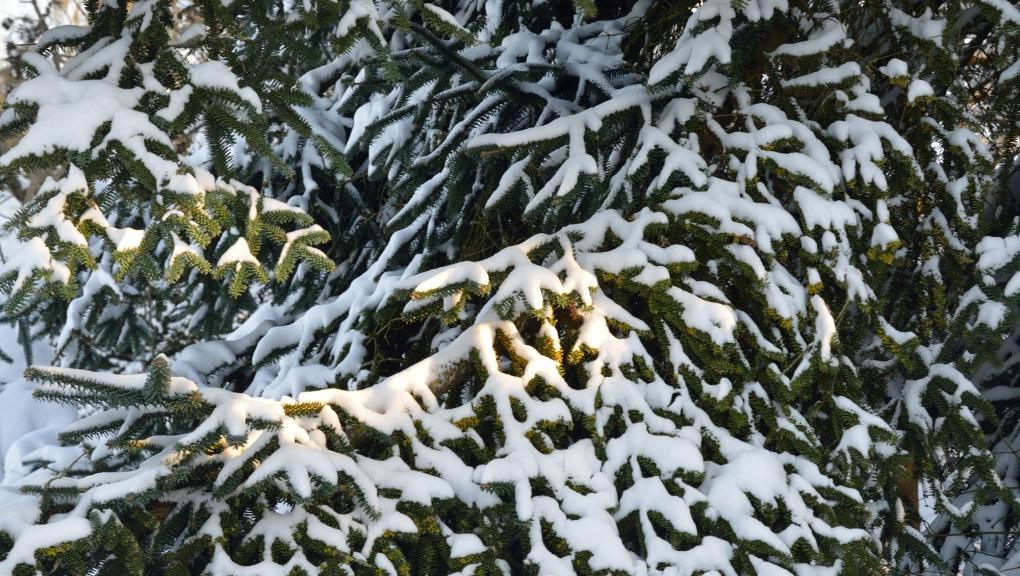 L'arboretum sous la neige © MNHN - S. Gerbault