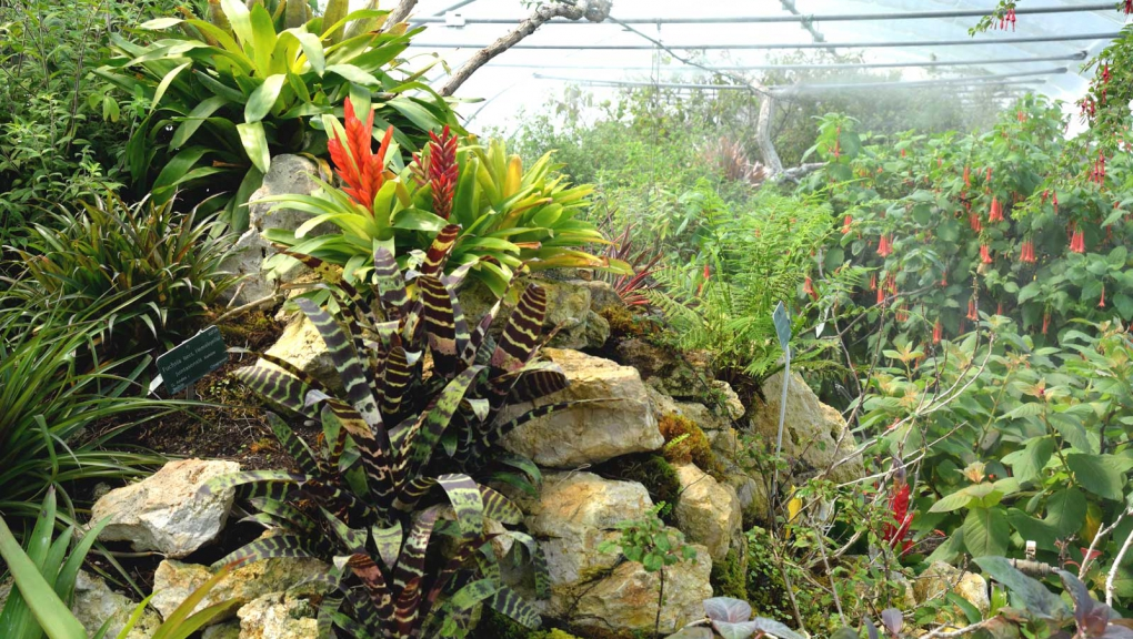 Serres tropicales de l'Arboretum de Versailles-Chèvreloup © MNHN - S. Gerbault
