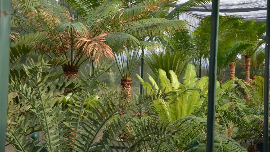 Ombrières des serres tropicales de l'Arboretum de Versailles-Chèvreloup © MNHN - S. Gerbault