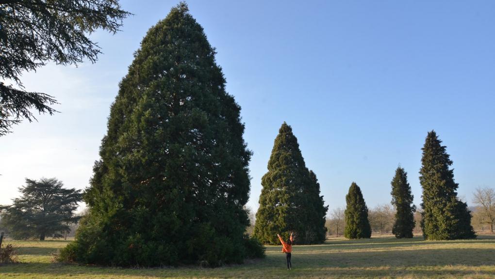 Visite à l'Arboretum de Versailles-Chèvreloup © MNHN - S. Gerbault