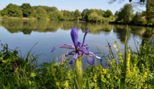 Vue sur l'étang aux hérons à l'Arboretum de Versailles-Chèvreloup © MNHN - J. Munier