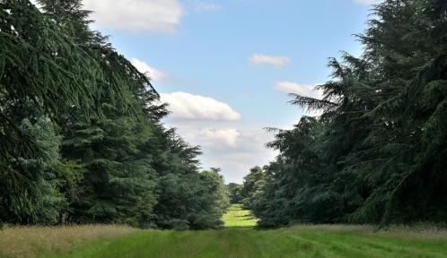 Allée des Cèdres bleus à l'Arboetum de Chèvreloup © MNHN