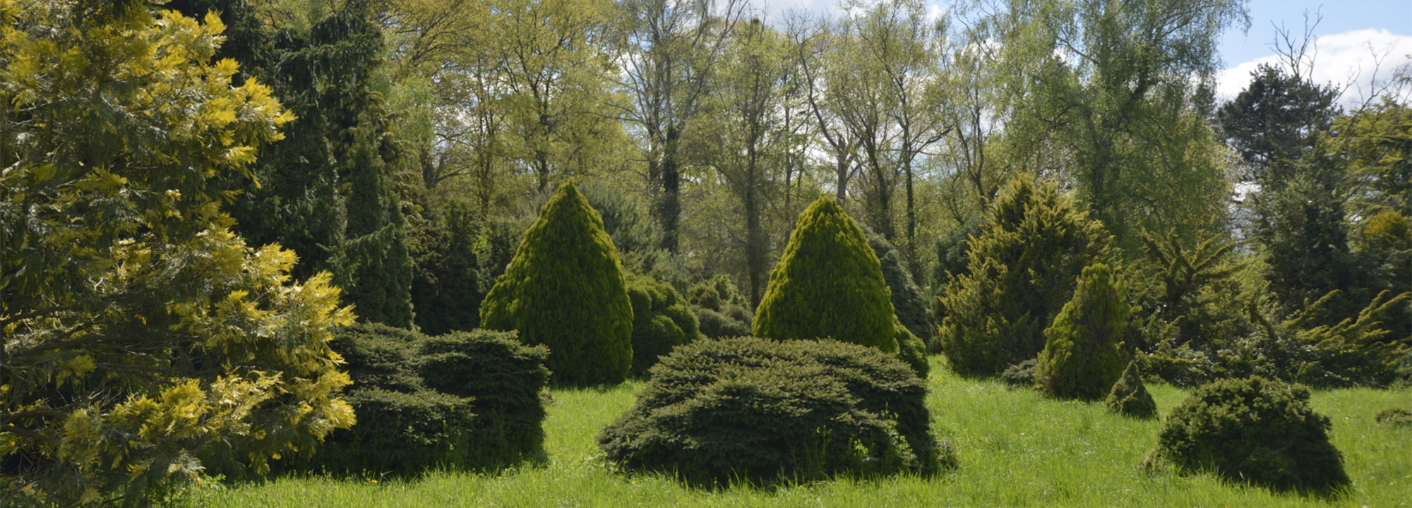 La collection de cultivars de conifères nains © MNHN - S. Gerbault