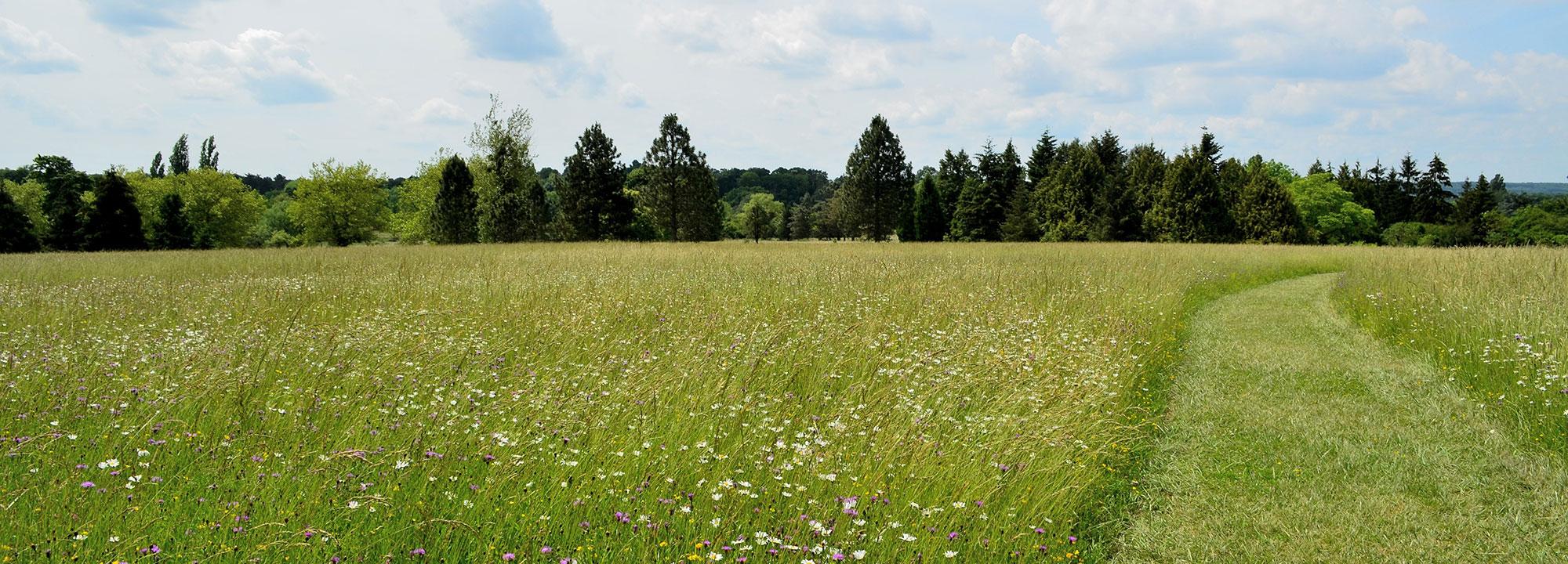 Prairie de la zone américaine fin mai © MNHN - Jérôme Munier