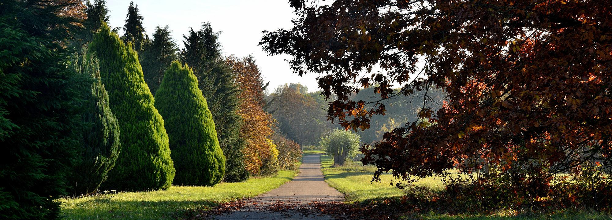 À droite, Chêne rouge (Quercus rubra), face au Dédale des Lawsons  © MNHN - S. Gerbault