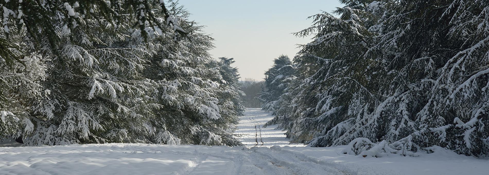Allée des Cèdres bleus de l'Atlas en hiver © MNHN - S. Gerbault