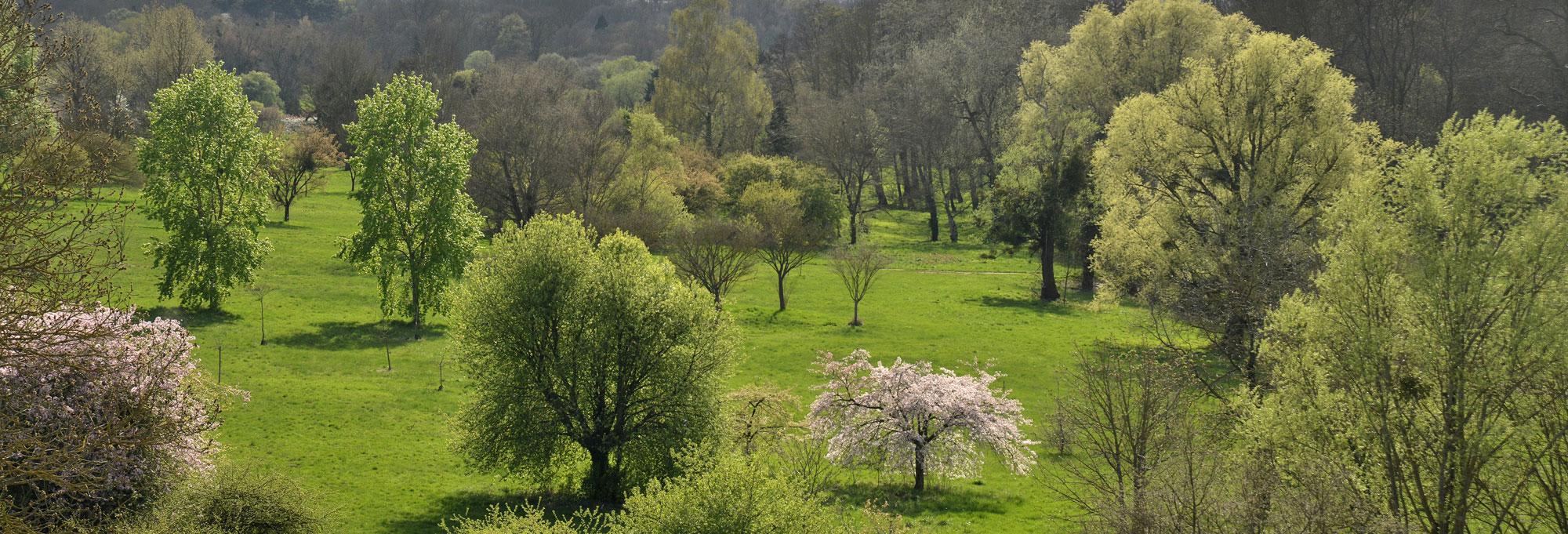 Vue de l'arboretum de Chèvreloup © MNHN - S. Gerbault