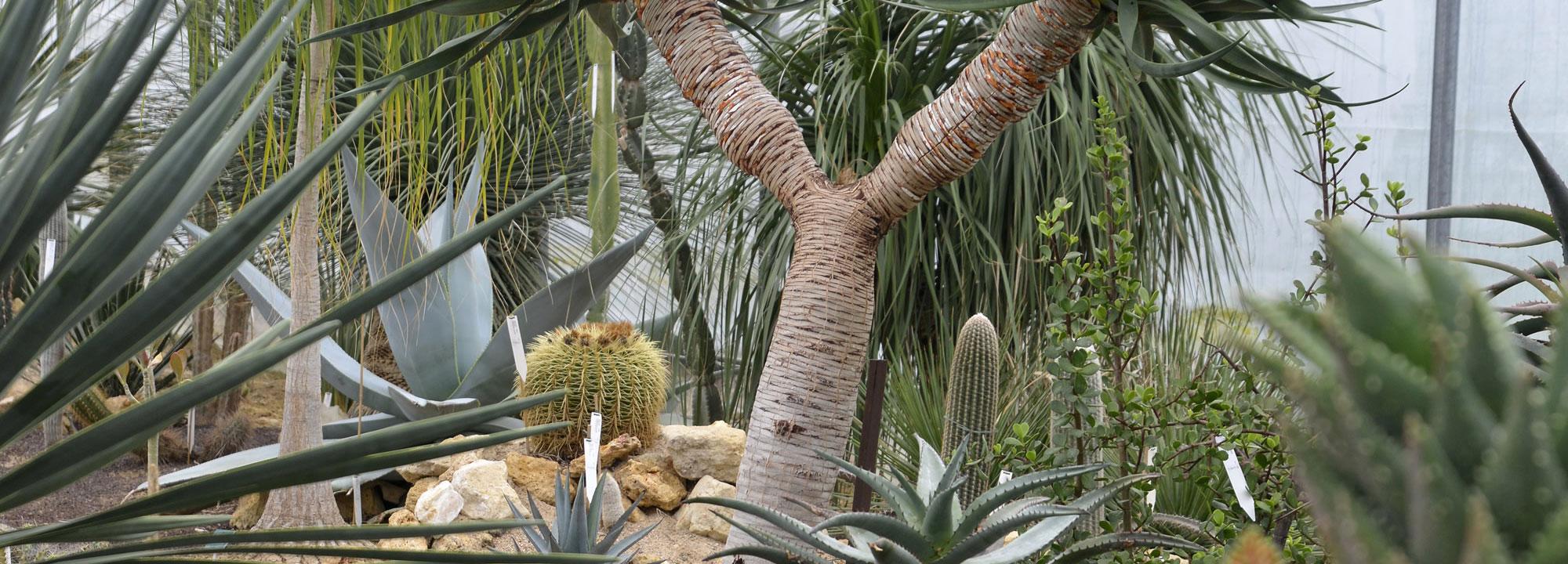 Serre des plantes succulentes à Chèvreloup © MNHN - S. Gerbault
